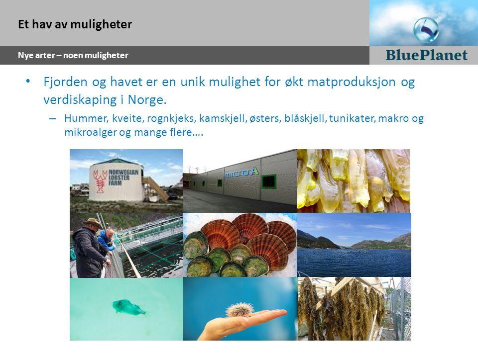Et hav av muligheter Nye arter – noen muligheter Fjorden og havet er en unik mulighet for økt matproduksjon og verdiskaping i Norge. – Hummer, kveite,