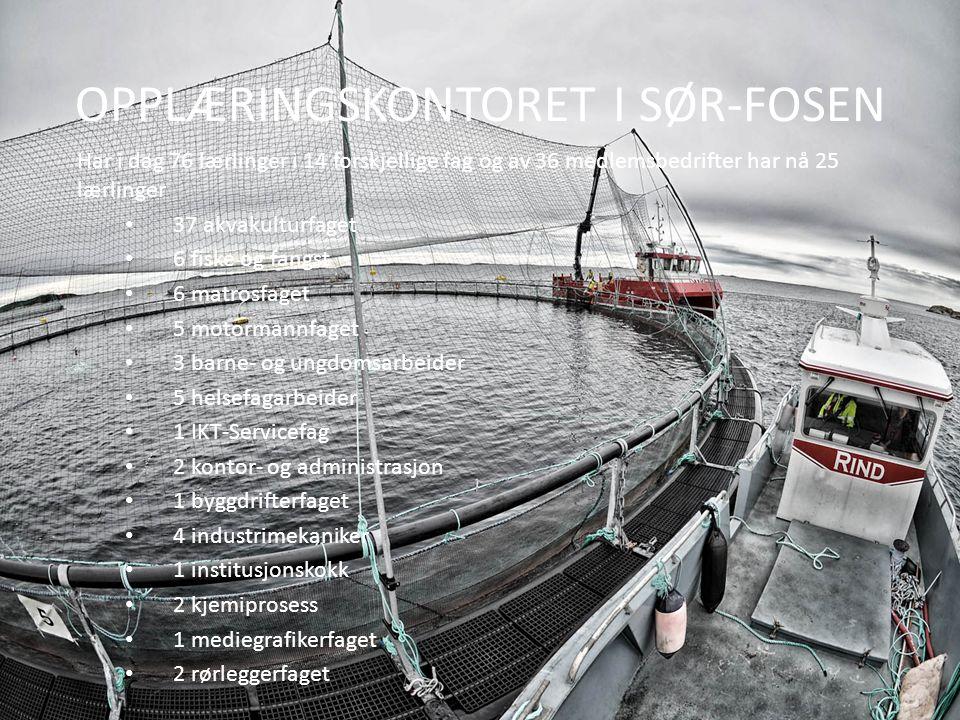 OPPLÆRINGSKONTORET I SØR-FOSEN Har i dag 76 lærlinger i 14 forskjellige fag og av 36 medlemsbedrifter har nå 25 lærlinger 37 akvakulturfaget 6 fiske og fangst 6 matrosfaget 5 motormannfaget 3 barne- og ungdomsarbeider 5 helsefagarbeider 1 IKT-Servicefag 2 kontor- og administrasjon 1 byggdrifterfaget 4 industrimekaniker 1 institusjonskokk 2 kjemiprosess 1 mediegrafikerfaget 2 rørleggerfaget