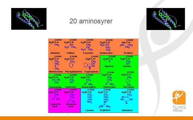 20 aminosyrer