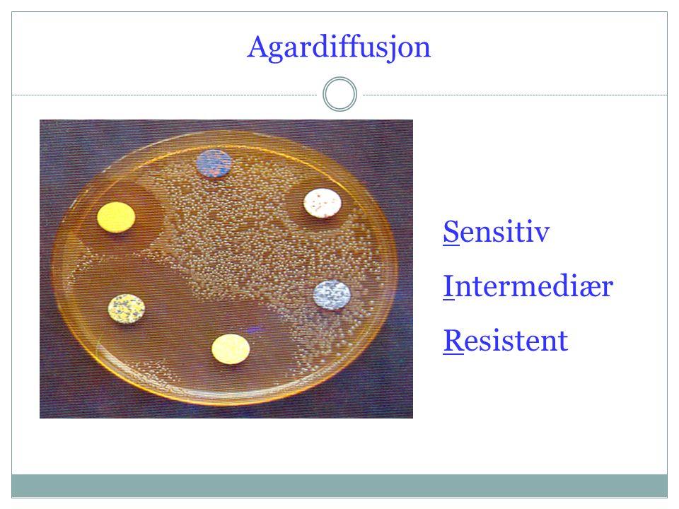 Agardiffusjon Sensitiv Intermediær Resistent