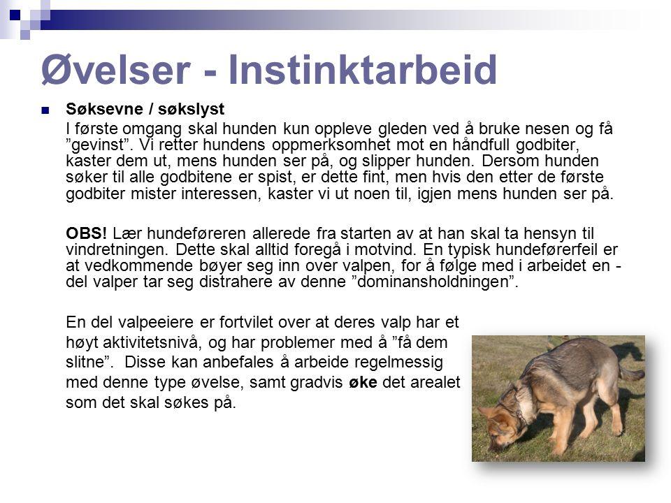 Øvelser - Instinktarbeid Søksevne / søkslyst I første omgang skal hunden kun oppleve gleden ved å bruke nesen og få gevinst .