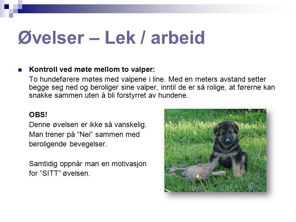 Øvelser – Lek / arbeid Kontroll ved møte mellom to valper: To hundeførere møtes med valpene i line.