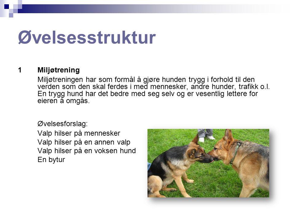 Øvelsesstruktur 1Miljøtrening Miljøtreningen har som formål å gjøre hunden trygg i forhold til den verden som den skal ferdes i med mennesker, andre hunder, trafikk o.l.