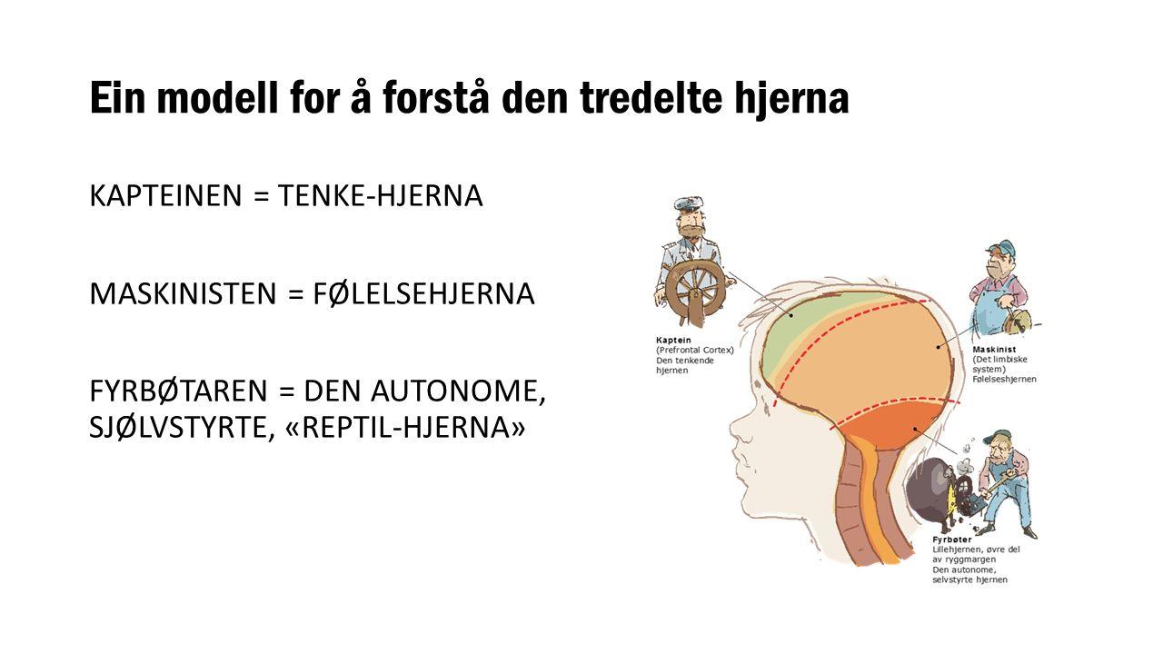 Ein modell for å forstå den tredelte hjerna KAPTEINEN = TENKE-HJERNA MASKINISTEN = FØLELSEHJERNA FYRBØTAREN = DEN AUTONOME, SJØLVSTYRTE, «REPTIL-HJERNA»