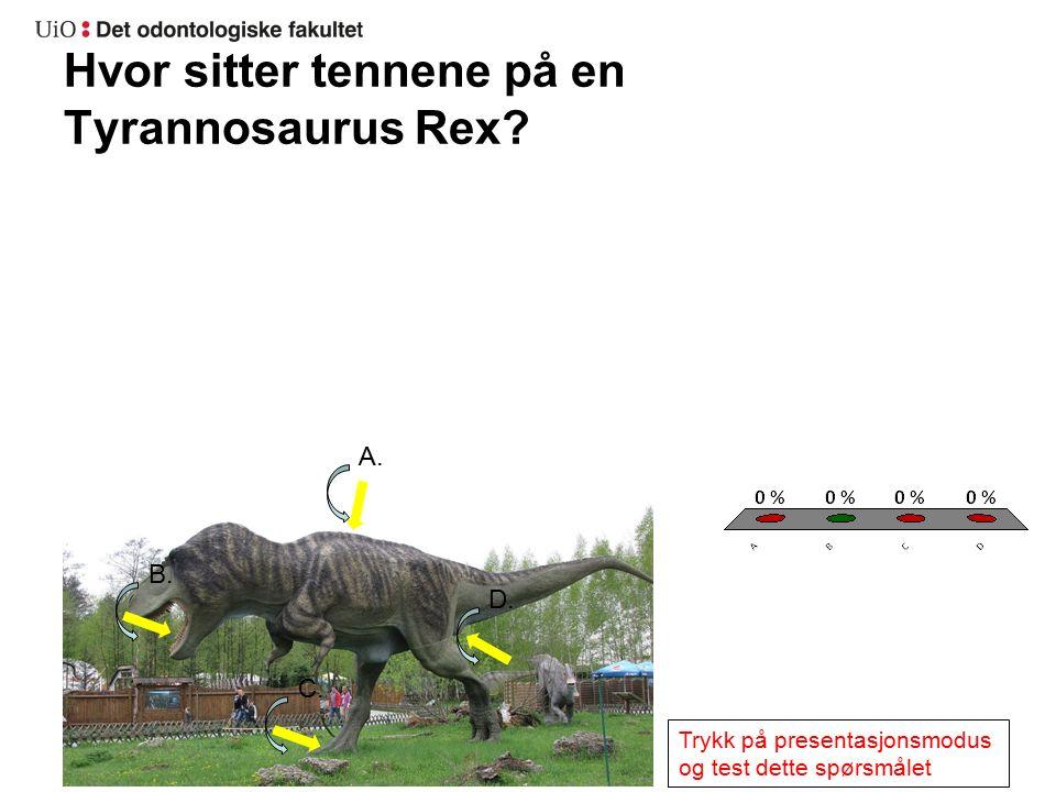Hvor sitter tennene på en Tyrannosaurus Rex. A. B.