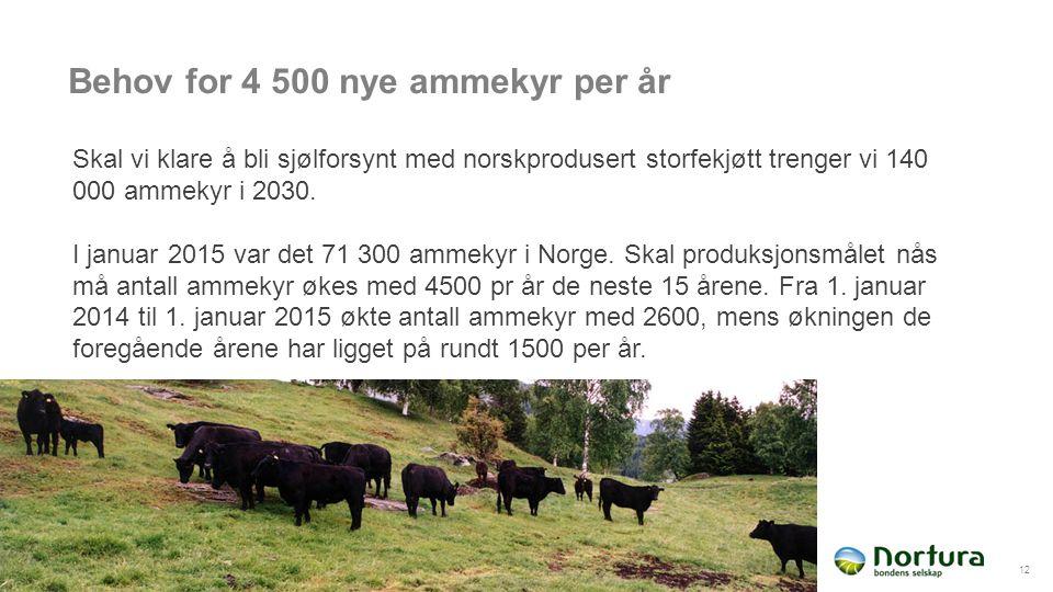 Behov for 4 500 nye ammekyr per år 12 Skal vi klare å bli sjølforsynt med norskprodusert storfekjøtt trenger vi 140 000 ammekyr i 2030.