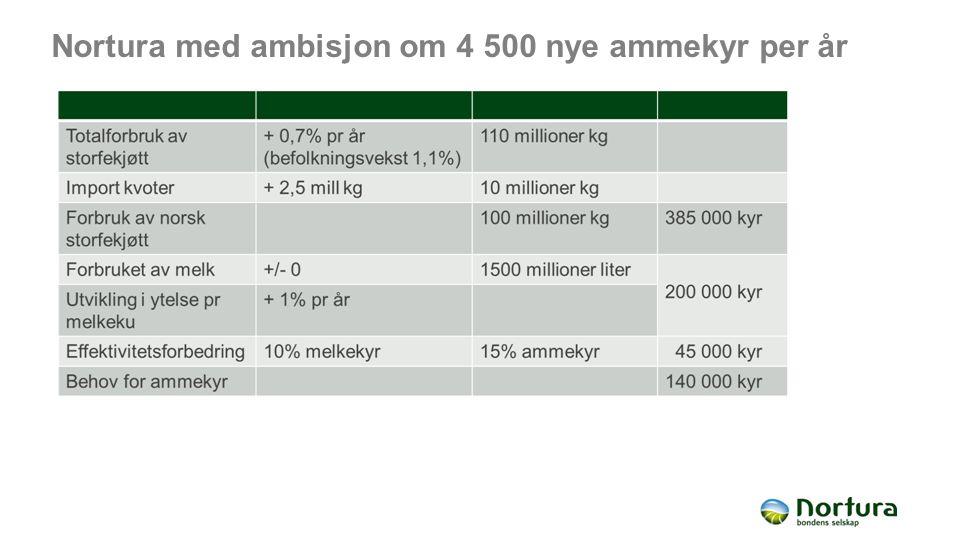 Nortura med ambisjon om 4 500 nye ammekyr per år