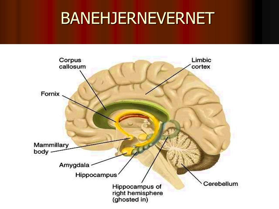 BANEHJERNEVERNET