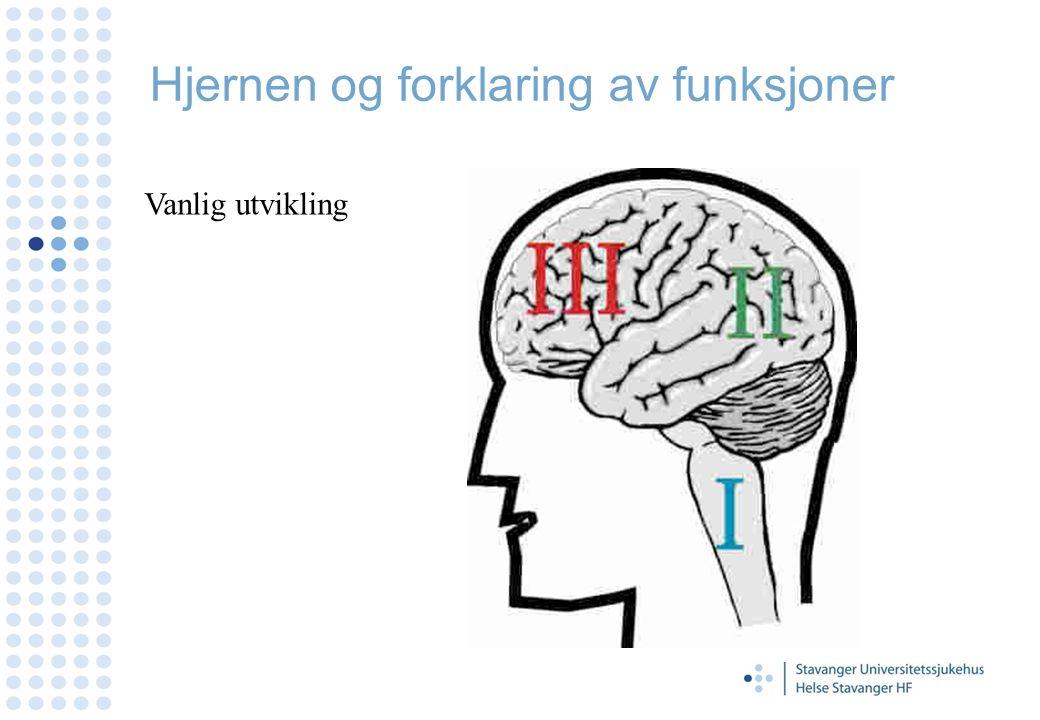 Hjernen og forklaring av funksjoner Vanlig utvikling