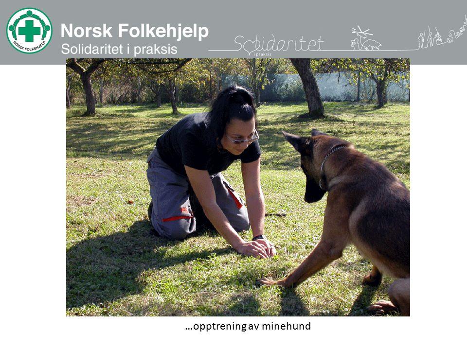 …opptrening av minehund