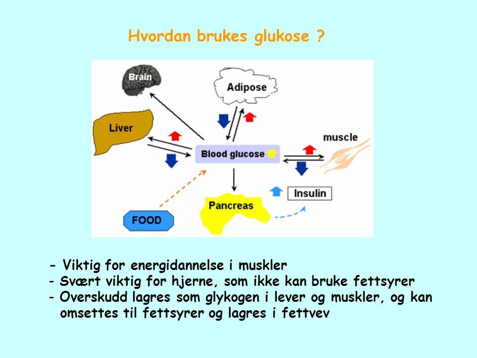 Hvordan brukes glukose ? - Viktig for energidannelse i muskler - Svært viktig for hjerne, som ikke kan bruke fettsyrer - Overskudd lagres som glykogen