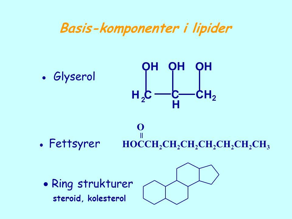 Basis-komponenter i lipider H 2 C C H CH 2 OH  Glyserol HOCCH 2 CH 2 CH 2 CH 2 CH 2 CH 2 CH 3 O =  Fettsyrer  Ring strukturer steroid, kolesterol