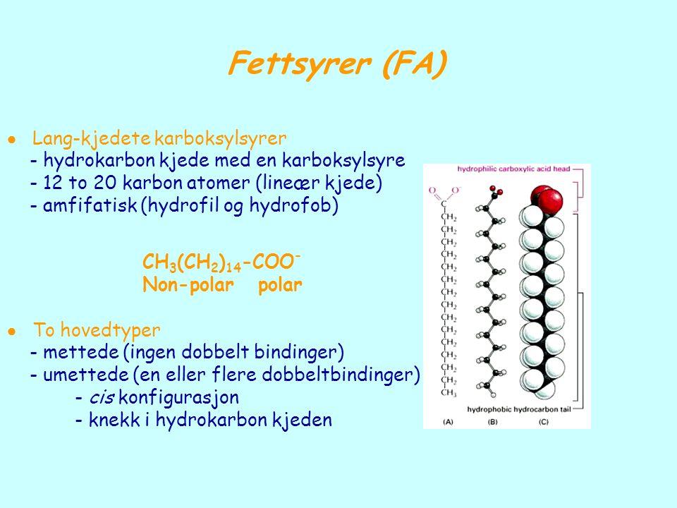 Fettsyrer (FA)  Lang-kjedete karboksylsyrer - hydrokarbon kjede med en karboksylsyre - 12 to 20 karbon atomer (lineær kjede) - amfifatisk (hydrofil o