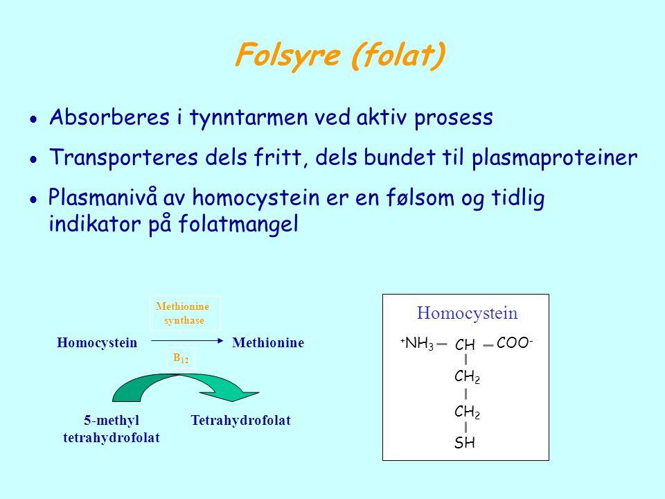 Folsyre (folat)  Absorberes i tynntarmen ved aktiv prosess  Transporteres dels fritt, dels bundet til plasmaproteiner  Plasmanivå av homocystein er