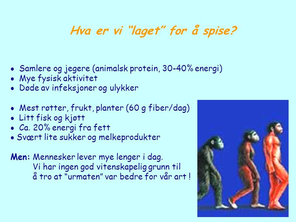 """Hva er vi """"laget"""" for å spise?  Samlere og jegere (animalsk protein, 30-40% energi)  Mye fysisk aktivitet  Døde av infeksjoner og ulykker  Mest rø"""