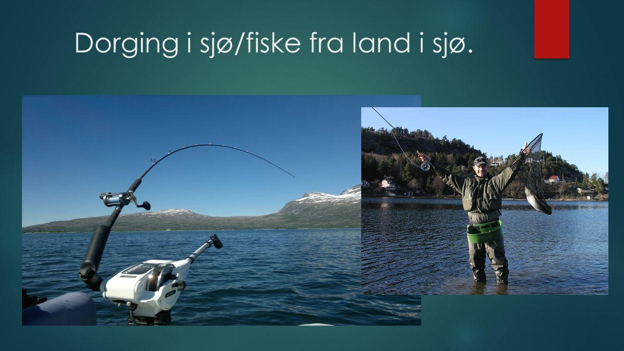 Dorging i sjø/fiske fra land i sjø.