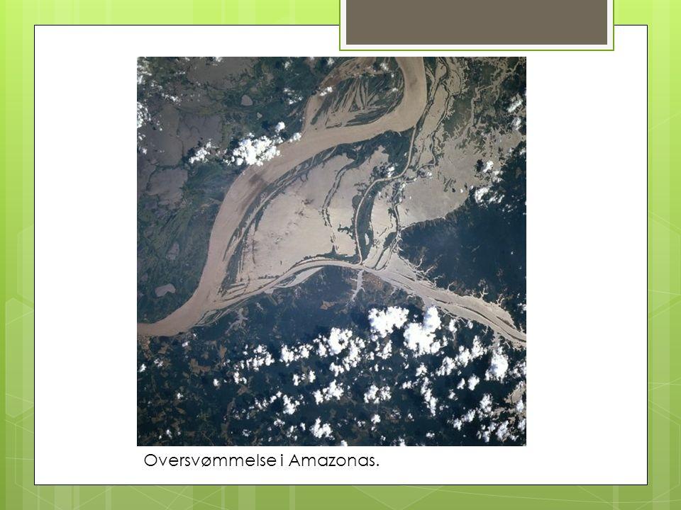 Oversvømmelse i Amazonas.
