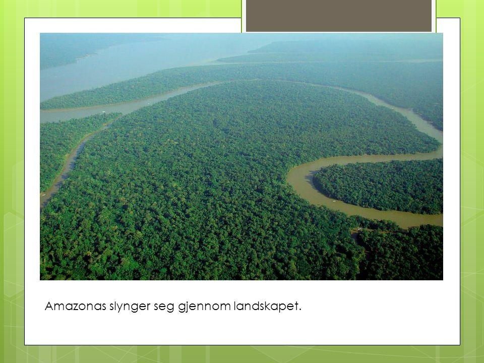 Amazonas slynger seg gjennom landskapet.