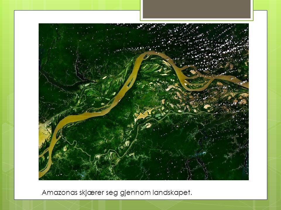 Amazonas skjærer seg gjennom landskapet.