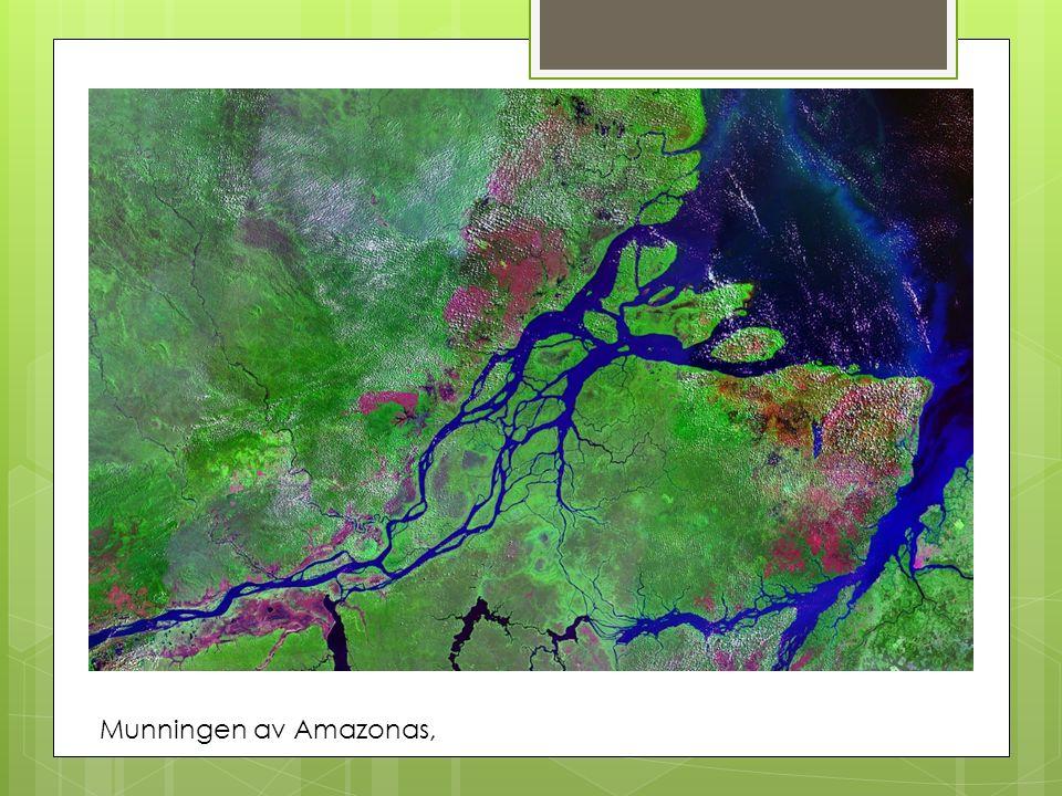 Munningen av Amazonas,