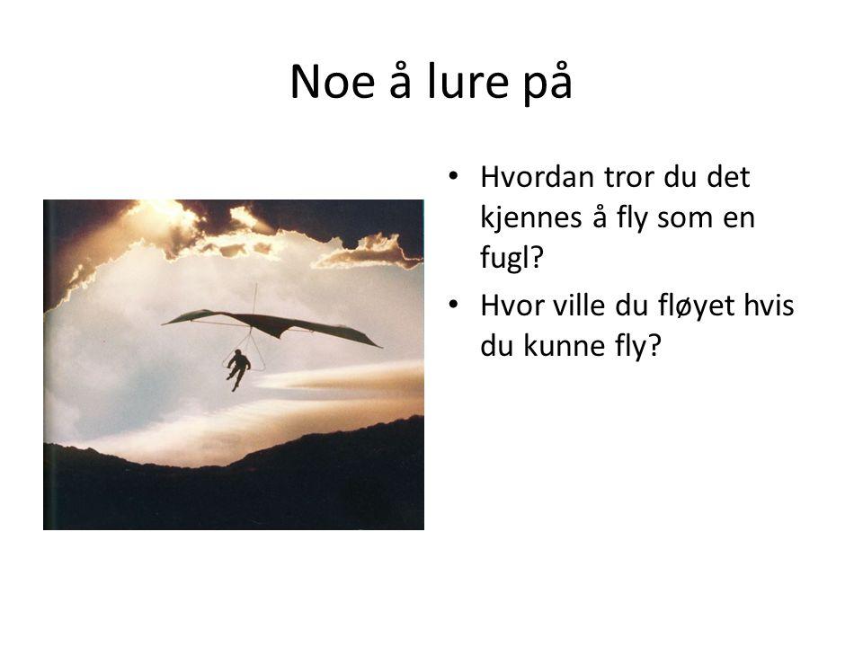 Noe å lure på Hvordan tror du det kjennes å fly som en fugl.