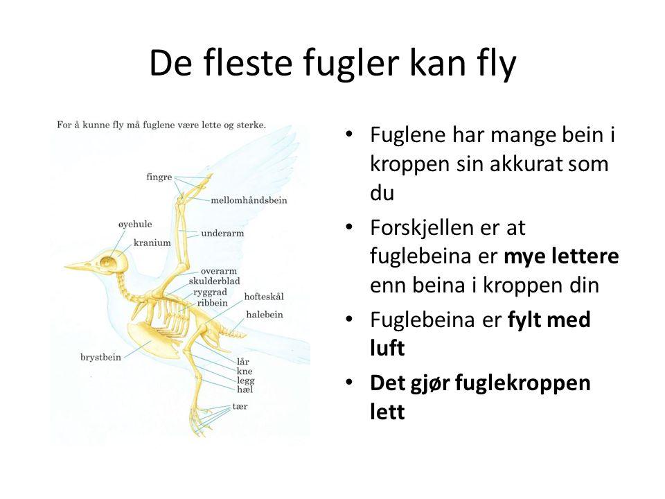 De fleste fugler kan fly Fjærene er også lette På vingene er fjærene store og stive De ligger inntil hverandre slik at fjærene dekker hverandre litt og danner en stor, tett flate