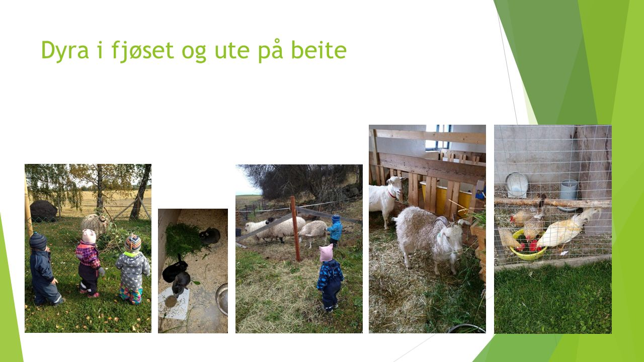 Livet på gården