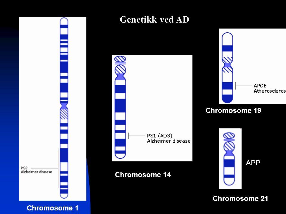 APP Chromosome 1 Chromosome 14 Chromosome 19 Chromosome 21 Genetikk ved AD
