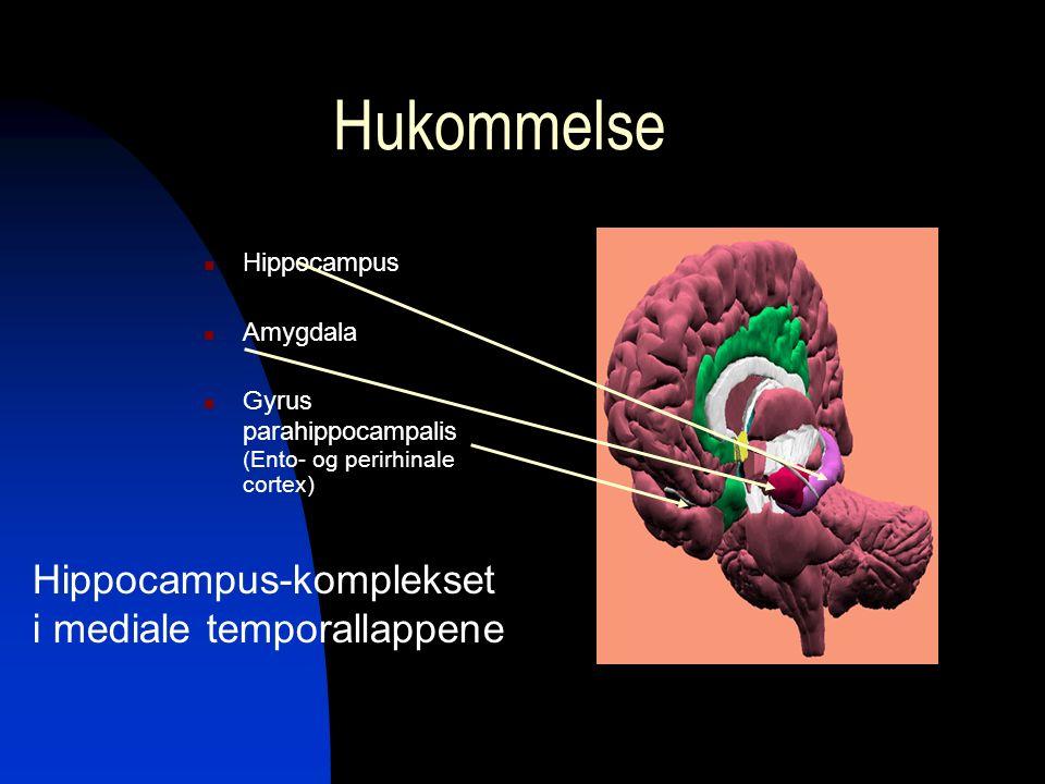 Hukommelse Hippocampus Amygdala Gyrus parahippocampalis (Ento- og perirhinale cortex) Hippocampus-komplekset i mediale temporallappene