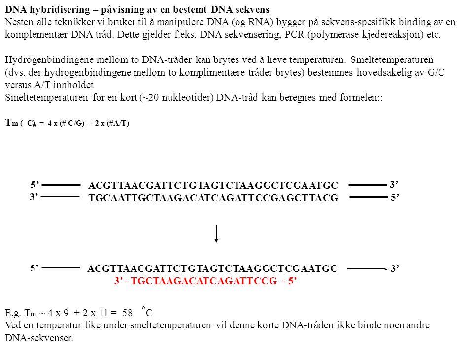 DNA hybridisering – påvisning av en bestemt DNA sekvens Nesten alle teknikker vi bruker til å manipulere DNA (og RNA) bygger på sekvens-spesifikk binding av en komplementær DNA tråd.