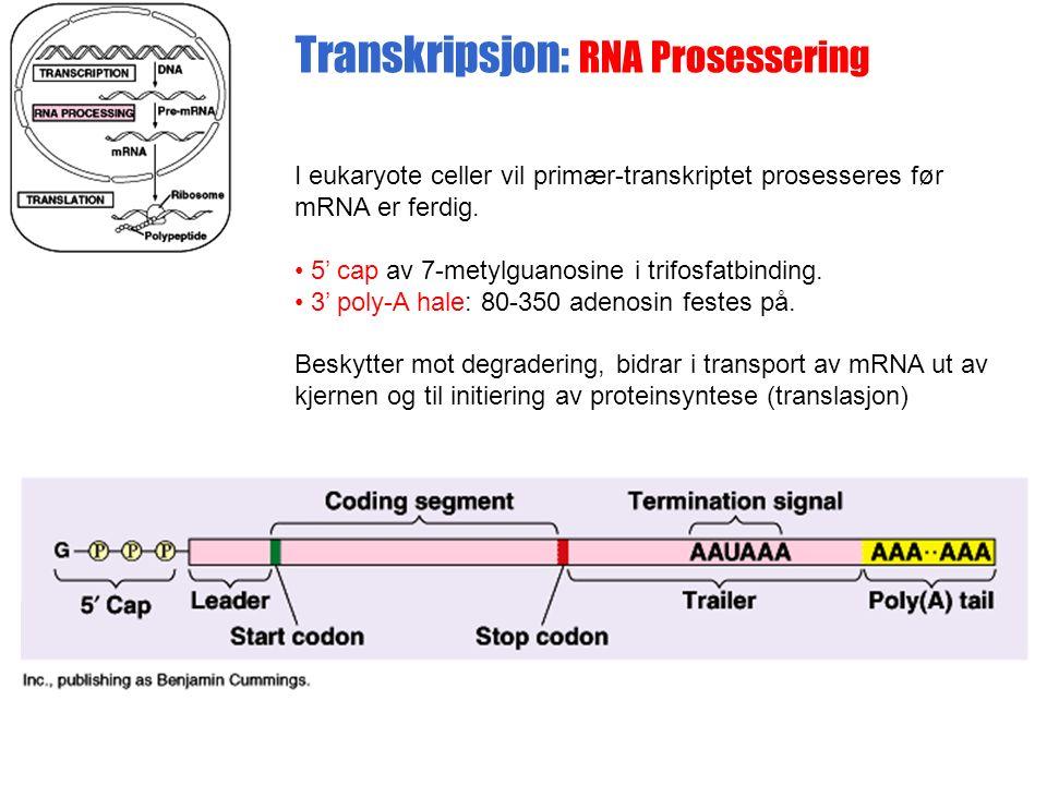 I eukaryote celler vil primær-transkriptet prosesseres før mRNA er ferdig.