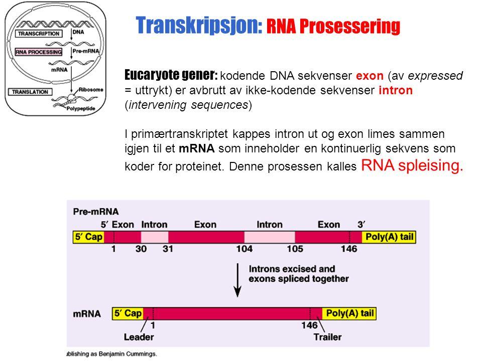 Eucaryote gener: kodende DNA sekvenser exon (av expressed = uttrykt) er avbrutt av ikke-kodende sekvenser intron (intervening sequences) I primærtranskriptet kappes intron ut og exon limes sammen igjen til et mRNA som inneholder en kontinuerlig sekvens som koder for proteinet.