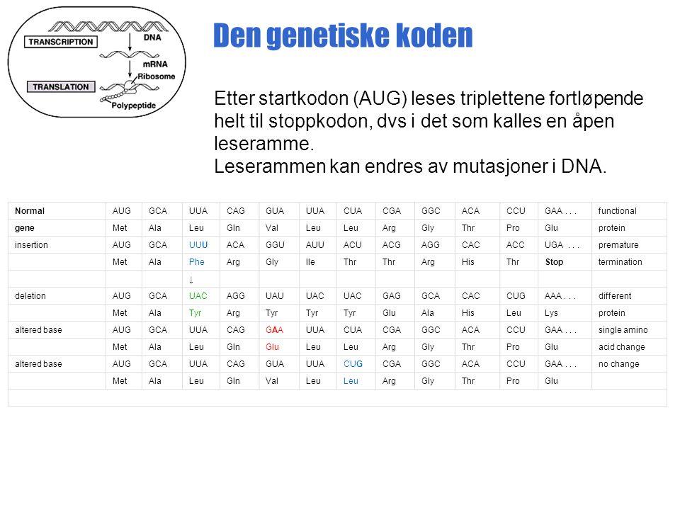 Den genetiske koden Etter startkodon (AUG) leses triplettene fortløpende helt til stoppkodon, dvs i det som kalles en åpen leseramme.