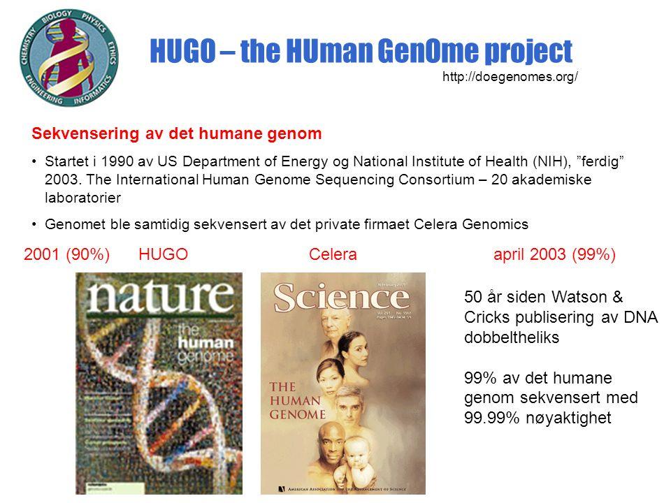 HUGO – the HUman GenOme project http://doegenomes.org/ Sekvensering av det humane genom Startet i 1990 av US Department of Energy og National Institute of Health (NIH), ferdig 2003.