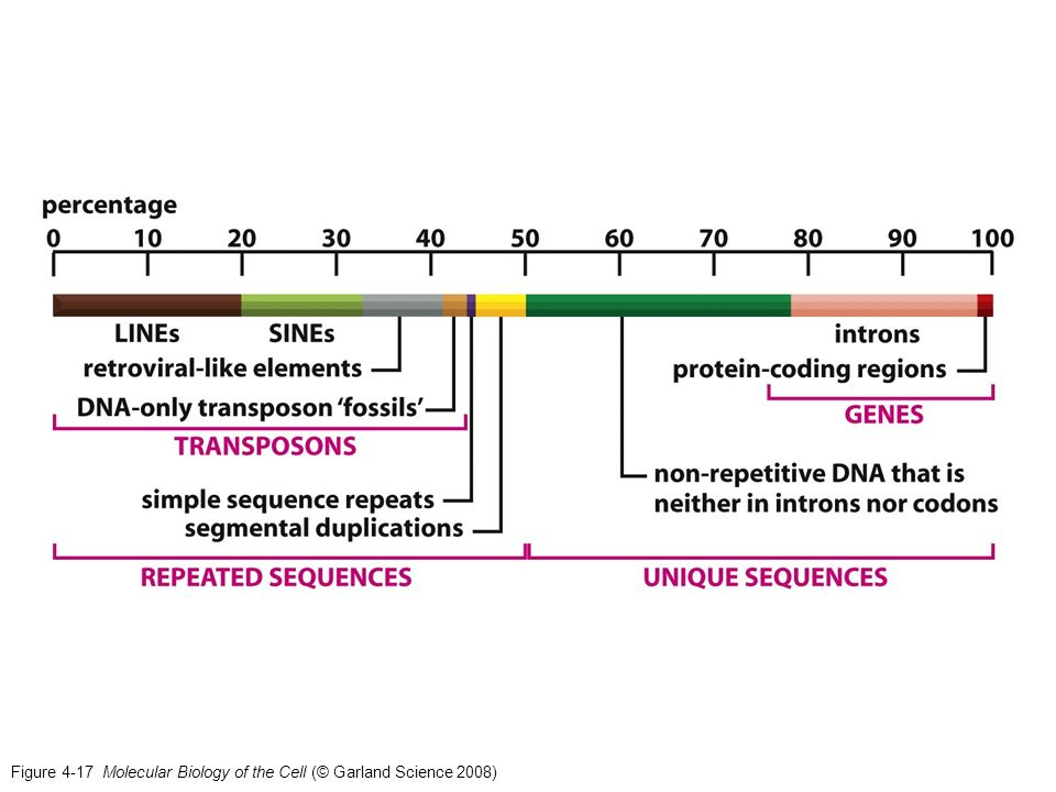 Figure 4-17 Molecular Biology of the Cell (© Garland Science 2008)
