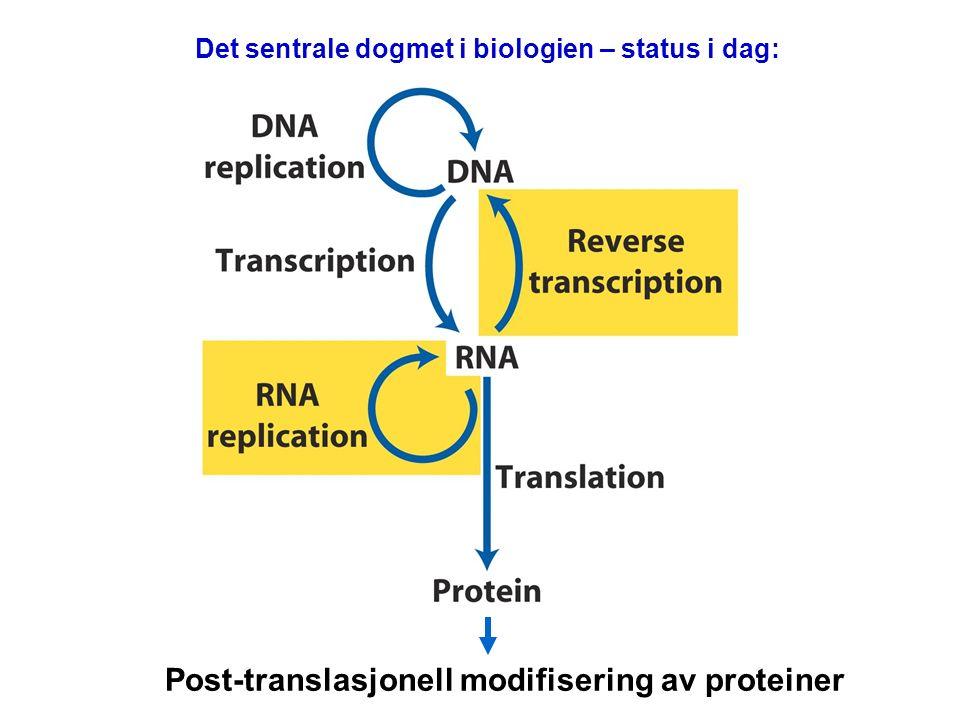 Det sentrale dogmet i biologien – status i dag: Post-translasjonell modifisering av proteiner