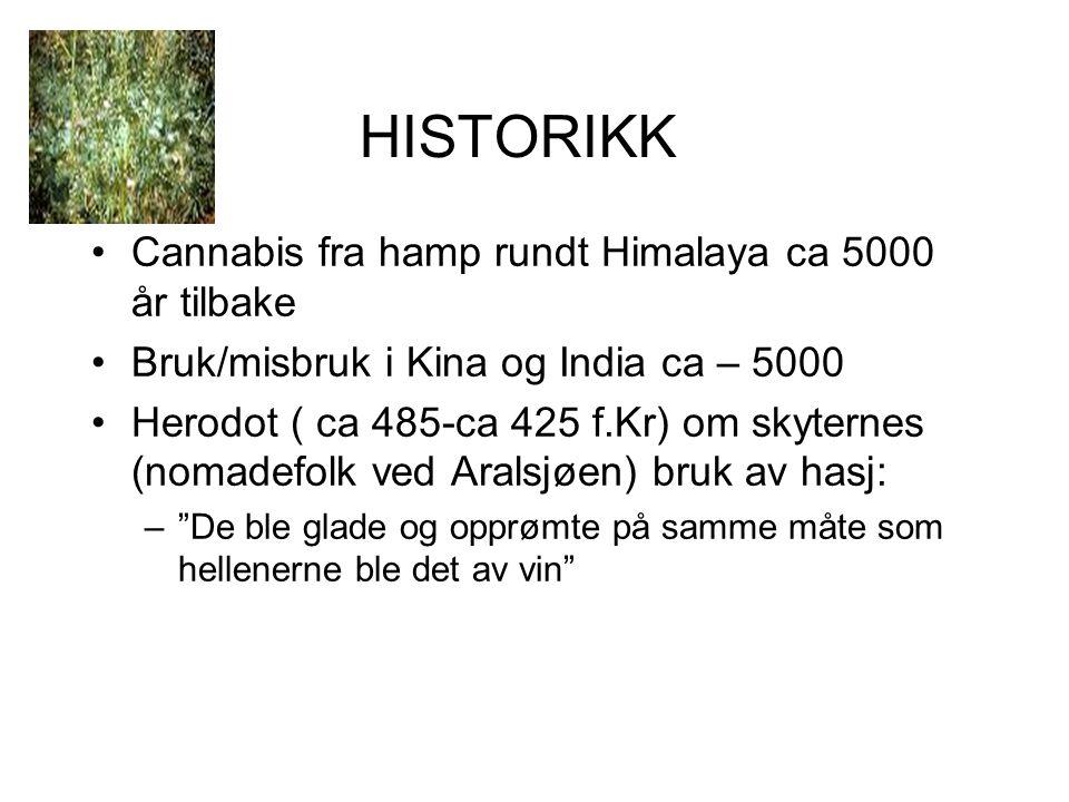 HISTORIKK Cannabis fra hamp rundt Himalaya ca 5000 år tilbake Bruk/misbruk i Kina og India ca – 5000 Herodot ( ca 485-ca 425 f.Kr) om skyternes (nomadefolk ved Aralsjøen) bruk av hasj: – De ble glade og opprømte på samme måte som hellenerne ble det av vin