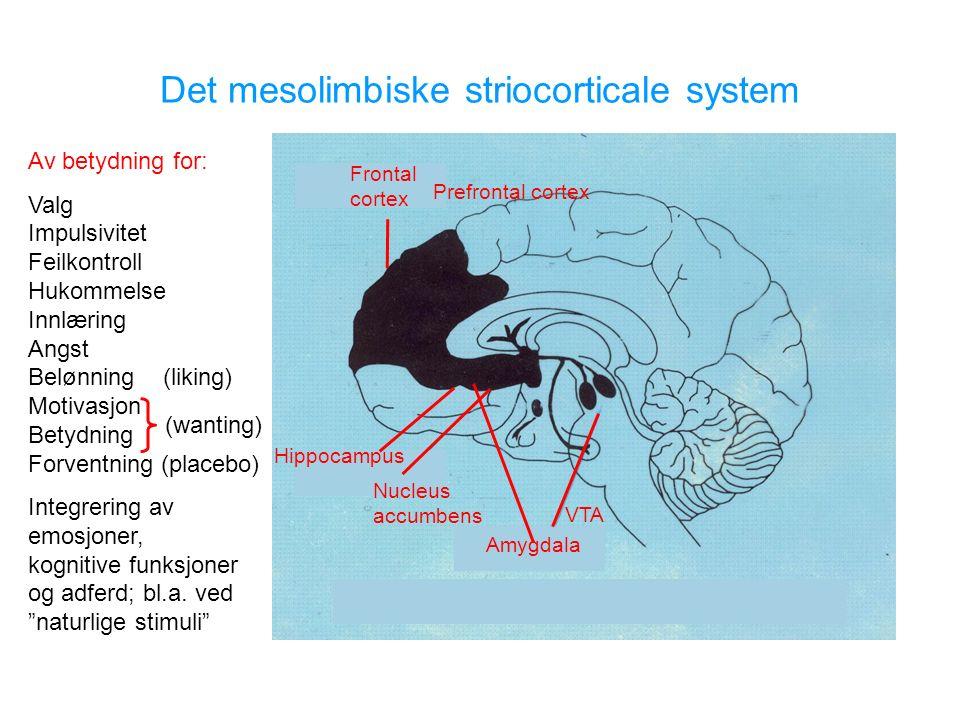 Amygdala Nucleus accumbens Hippocampus Frontal cortex Prefrontal cortex Av betydning for: Valg Impulsivitet Feilkontroll Hukommelse Innlæring Angst Belønning (liking) Motivasjon Betydning Forventning (placebo) Integrering av emosjoner, kognitive funksjoner og adferd; bl.a.