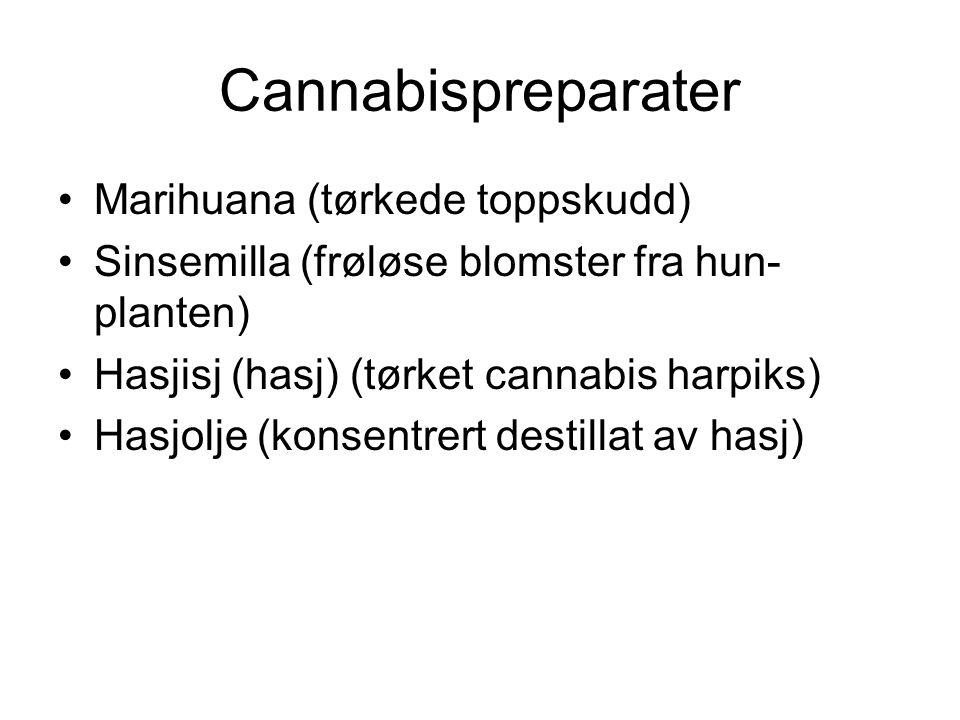 Cannabispreparater Marihuana (tørkede toppskudd) Sinsemilla (frøløse blomster fra hun- planten) Hasjisj (hasj) (tørket cannabis harpiks) Hasjolje (konsentrert destillat av hasj)