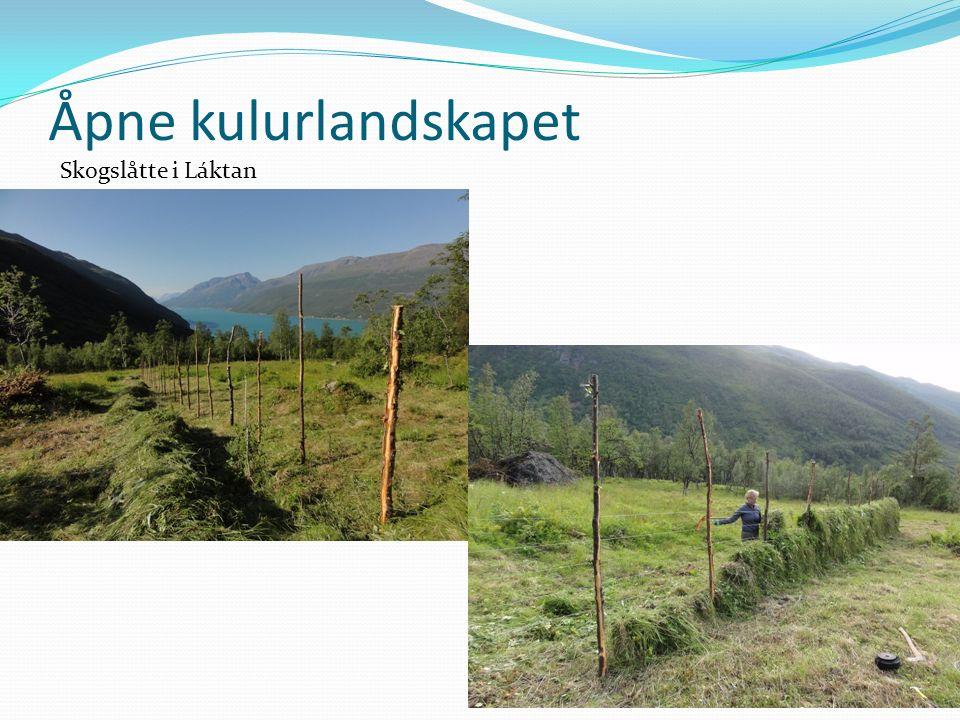 Åpne kulurlandskapet Skogslåtte i Láktan