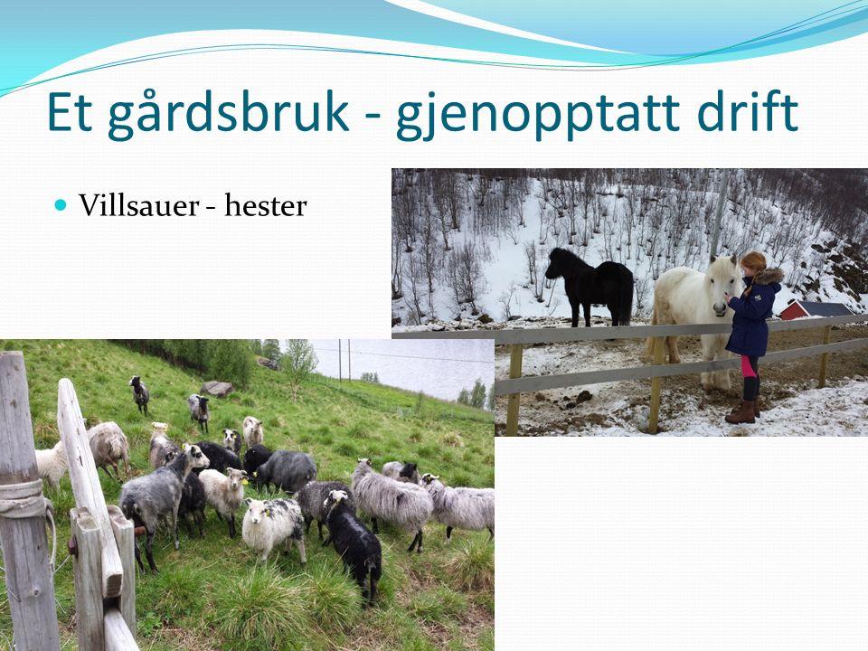 Et gårdsbruk - gjenopptatt drift Villsauer - hester