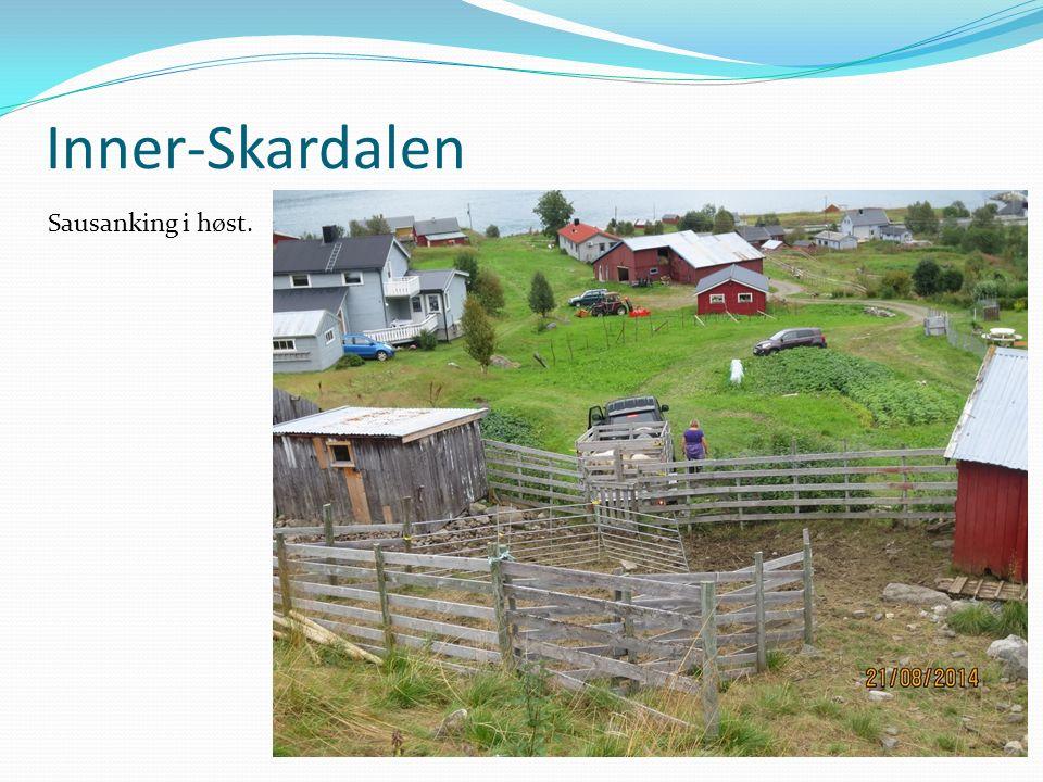 Inner-Skardalen Sausanking i høst.