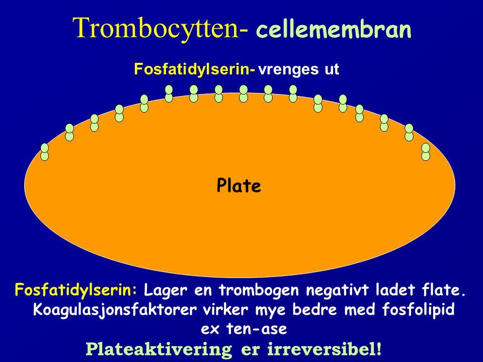 Trombocytten- cellemembran Plate Fosfatidylserin- vrenges ut Fosfatidylserin: Lager en trombogen negativt ladet flate. Koagulasjonsfaktorer virker mye
