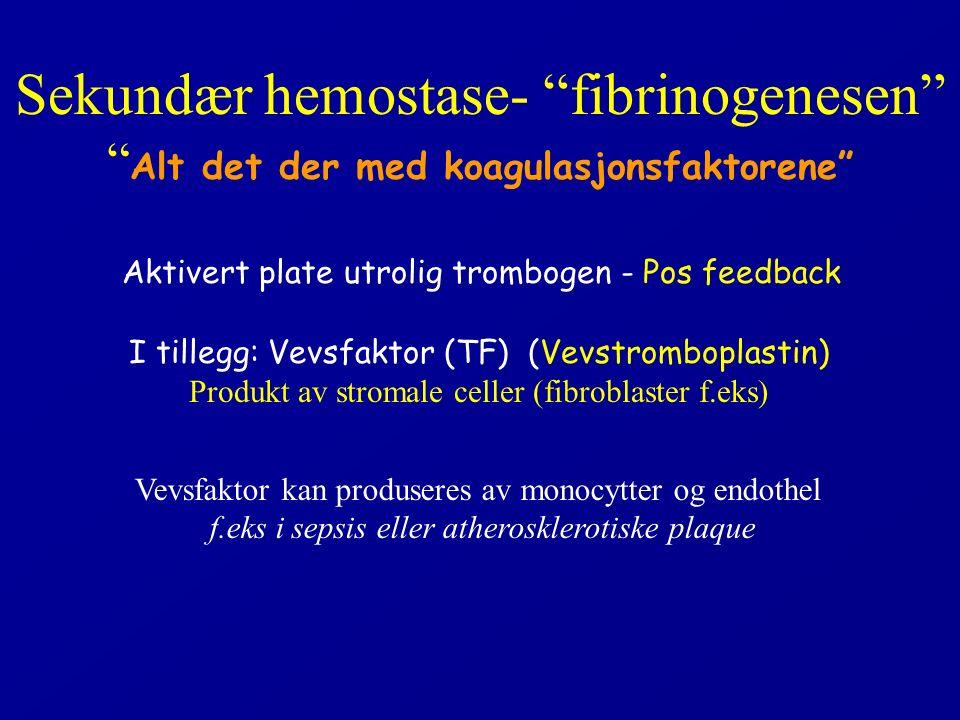 Sekundær hemostase- fibrinogenesen Alt det der med koagulasjonsfaktorene Aktivert plate utrolig trombogen - Pos feedback I tillegg: Vevsfaktor (TF) (Vevstromboplastin) Produkt av stromale celler (fibroblaster f.eks) Vevsfaktor kan produseres av monocytter og endothel f.eks i sepsis eller atherosklerotiske plaque