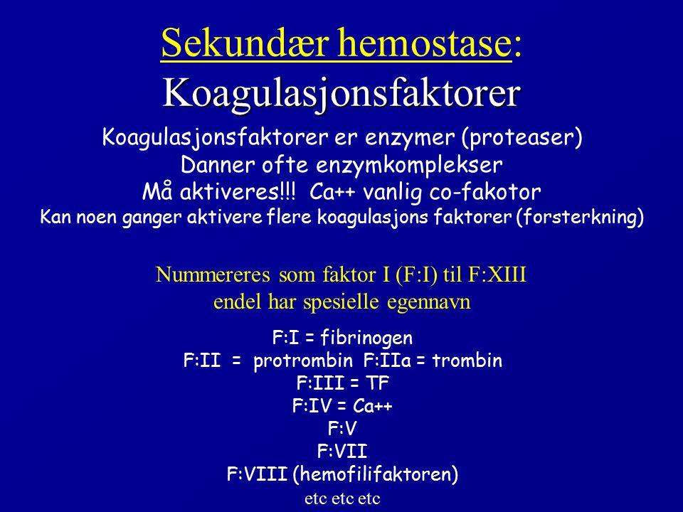 Koagulasjonsfaktorer Sekundær hemostase: Koagulasjonsfaktorer Koagulasjonsfaktorer er enzymer (proteaser) Danner ofte enzymkomplekser Må aktiveres!!!