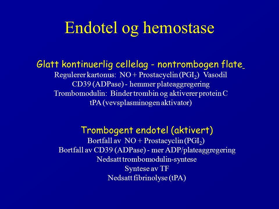 Endotel og hemostase Glatt kontinuerlig cellelag - nontrombogen flate Regulerer kartonus: NO + Prostacyclin (PGI 2 ) Vasodil CD39 (ADPase) - hemmer plateaggregering Trombomodulin: Binder trombin og aktiverer protein C tPA (vevsplasminogen aktivator) Trombogent endotel (aktivert) Bortfall av NO + Prostacyclin (PGI 2 ) Bortfall av CD39 (ADPase) - mer ADP/plateaggregering Nedsatt trombomodulin-syntese Syntese av TF Nedsatt fibrinolyse (tPA)