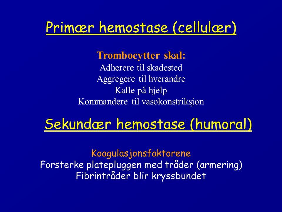 Primær hemostase (cellulær) Trombocytter skal: Adherere til skadested Aggregere til hverandre Kalle på hjelp Kommandere til vasokonstriksjon Koagulasjonsfaktorene Forsterke platepluggen med tråder (armering) Fibrintråder blir kryssbundet Sekundær hemostase (humoral)