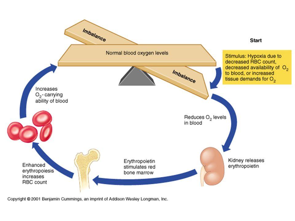 Behandling med vekstfaktor Kunstig fremstilt EPO brukes først og fremst i behandlingen av pasienter med anemi på grunn av nyresvikt og kreft.