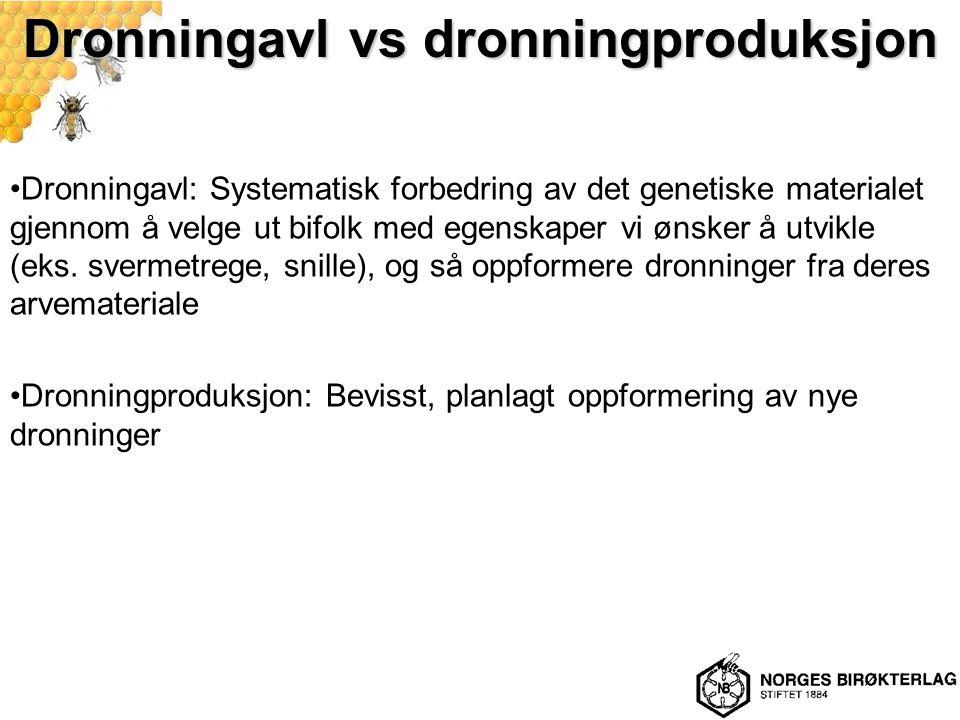 Dronningavl vs dronningproduksjon Dronningavl: Systematisk forbedring av det genetiske materialet gjennom å velge ut bifolk med egenskaper vi ønsker å utvikle (eks.