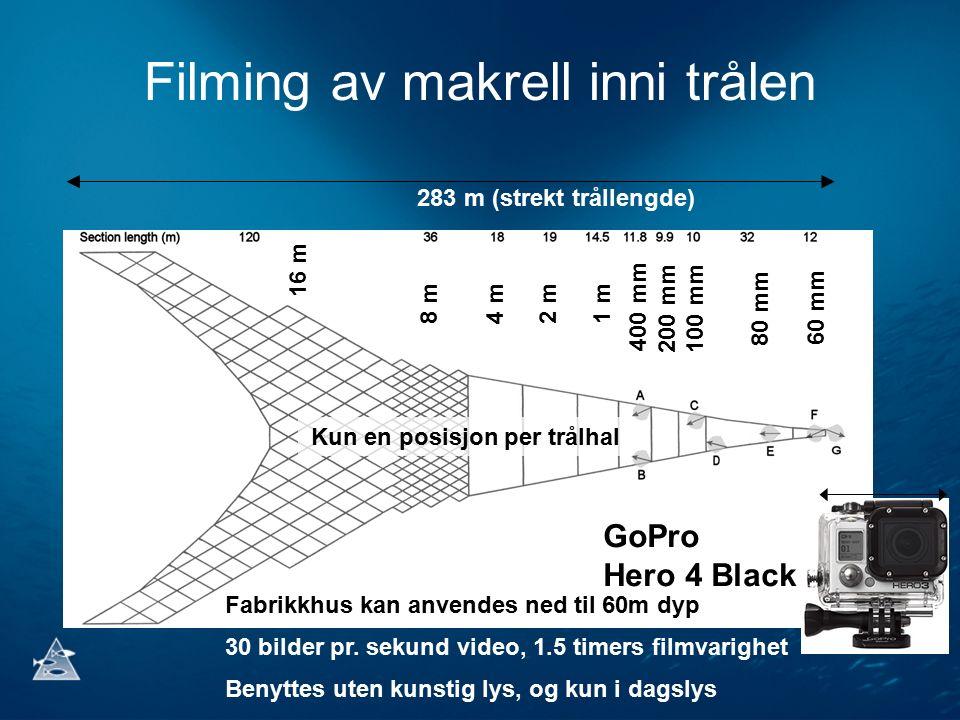Filming av makrell inni trålen 283 m (strekt trållengde) 16 m 8 m4 m2 m1 m 400 mm 200 mm100 mm 80 mm 60 mm Fabrikkhus kan anvendes ned til 60m dyp 30 bilder pr.